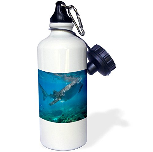 3dRose Danita Delimont - Marine Life - Whale shark with a remora feeding at surface, Oslob, Cebu, Philippines - 21 oz Sports Water Bottle (wb_257245_1) by 3dRose