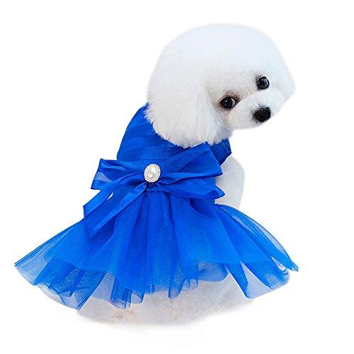 Most Popular Dog Dresses