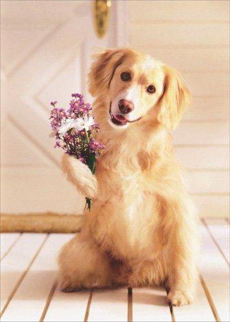 Dog Holding Bouquet of Flowers Golden Labrador Retriever Mother's Day Card by Avanti Press (Days Bouquet Golden)