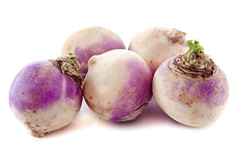 - 200+ ORGANICALLY GROWN American Purple Top Rutabaga Turnip Seed Heirloom NON-GMO, Brassica napus var. napobrassica. From USA