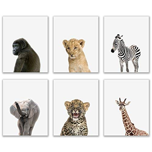 Crystal Baby Safari Animals Poster Prints  Set of 6 8x10 Adorable Furry African Portraits Wall Art Nursery Decor  Gorilla  Elephant  Zebra  Giraffe  Leopard  Lion