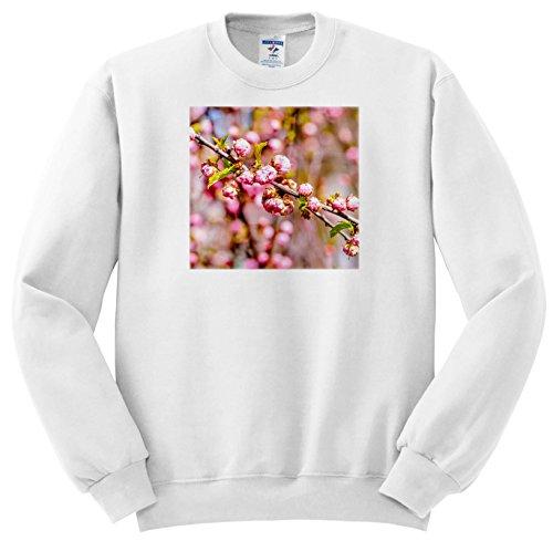 Branch Plum Flower (3dRose Alexis Photography - Flowers Sakura - Branch of Flowering Plum Tree with Flowers - Sweatshirts - Adult Sweatshirt Large (ss_271526_3))