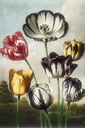 (Journal: Lined Featuring Vintage Art of Flowers - Alineado Con Arte Vintage de Flores Tulipán)