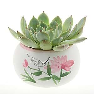 NW mayorista–Color blanco y rosa de cerámica rosa flor y colibrí maceta para flores y Cactus