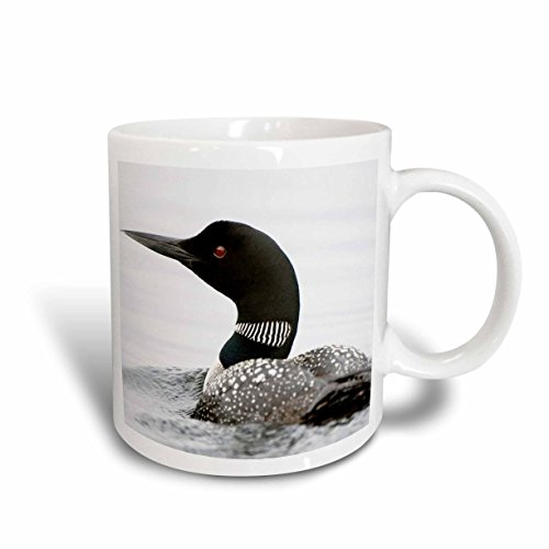 3dRose mug_70594_2 Bird, Common Loon, Gavia Immer, Haliburton, Ontario CN08 PCL0004 Paul Colangelo Ceramic Mug, 15-Ounce