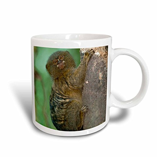 3dRose mug_86403_2 Pygmy Marmoset, Napo River, Yasuni, Amazon, Ecuador SA07 POX2038 Pete Oxford Ceramic Mug, 15 oz, White