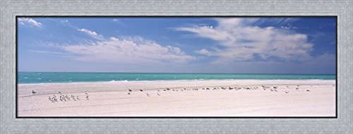 Flock of seagulls on the beach, Lido Beach, St. Armands Key, Sarasota Bay, Florida, USA by Panoramic Images Framed Art Print Wall Picture, Flat Silver Frame, 41 x 16 - Florida Armands St