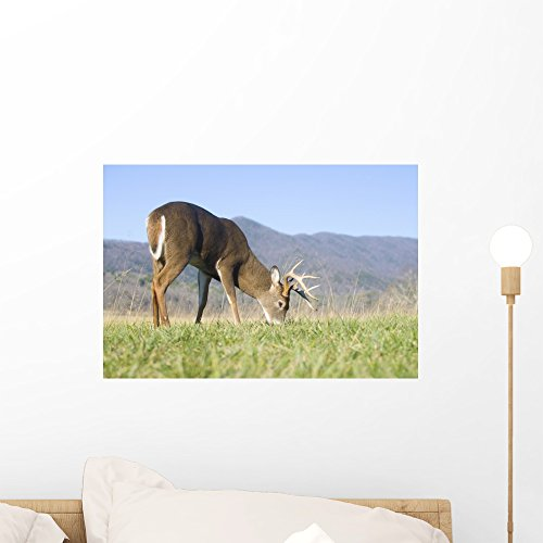 Wallmonkeys Whitetail Buck Grazing Wall Mural Peel and Stick Graphic (18 in W x 12 in H) WM204407 ()