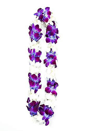 (Fresh Graduation Orchid Leis - Double Strand Leis l Gift for Graduation l Wedding Orchid Lei l Double Orchid Lei l Orchid Lei for Graduation (Purple Sonnia & White))