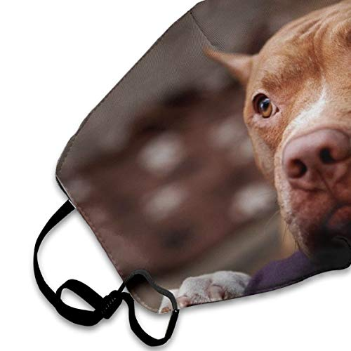 NOT Cute Animal Puppy Dog Brown Pitbull PM2.5 Mask, Adjustable Warm Face Mask Can Be Washed Reusable Pollen Masks Cotton Mouth Mask for Men Women