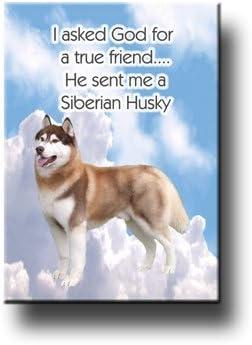 "Funny Siberian Husky  refrigerator magnet 3 1//2x 3 1//2/"""