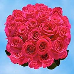 100 Fresh Cut Hot Pink Roses for Valentine's Day | Versilia Roses | Fresh Flowers Express Delivery | The Perfect Valentine's Day Gift