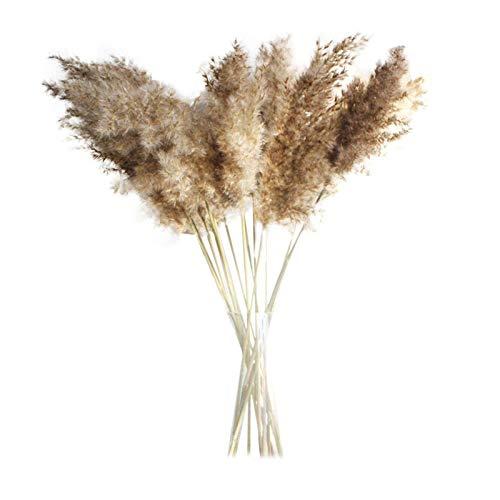 30/50pcs Naturelles Séchée Herbe De Pampa 50cm Naturel Pampa Fleur Bouquet de Fleurs Sechees pour Vases Queue de Lapin…