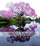 100/bag rare pink Paulownia Seeds (princess tree or empress tree)--impressive and add beauty to your gard 95%+ germination