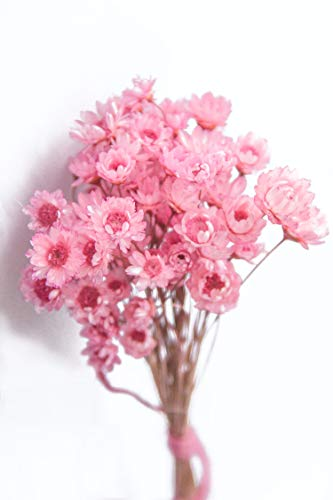 100 Stems Natural Dry Flowers Brazilian Small Star Daisy Decorative Dried Flowers Mini Daisy Chamomile Bouquet for Wedding Floral Arrangements Home Decorations (Pink)
