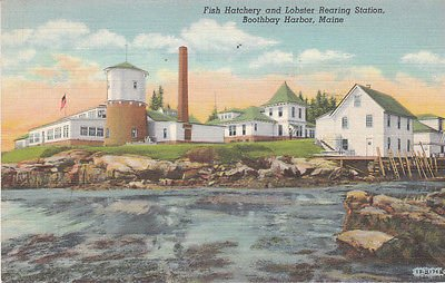F9191 ME, Boothbay Harbor Fish Hatchery Postcard
