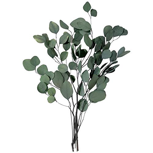 Justmeetyou Eucalyptus Branches - Green Silver Dollar Leaves, Dried Flowers Wholesale Express Delivery