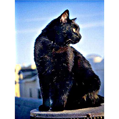DIY 5D Diamond Painting Kit, Full Drill Black Cat Embroidery Cross Stitch Arts Craft Canvas Wall Decor 18x24 inch / 45x60 cm (Stitch Cat Black Cross)