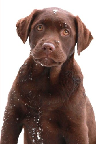 Chocolate Labrador Retriever Puppy Snowflakes: (Notebook, Diary, Blank Book) (Pet Photo Journals Notebooks ()