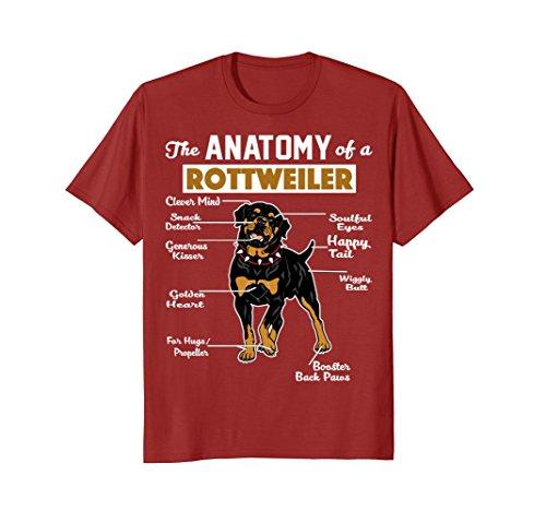 Mens The Anatomy Of A Rottweiler Shirt 2XL Cranberry