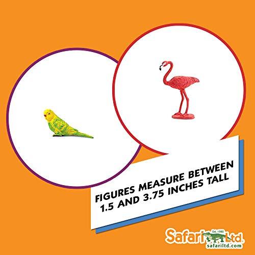 1c521d33e48e68 Safari Ltd Exotic Birds TOOB - 11 Different Hand Painted