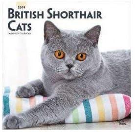 Calendario 2019 gato británico de pelo corto – gato de Race – British + incluye un – Agenda de bolsillo 2019: Amazon.es: Oficina y papelería