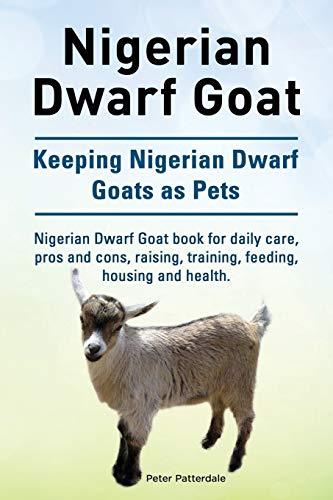 Nigerian Dwarf Goat. Keeping Nigerian Dwarf Goats