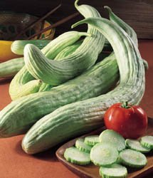 Cucumber Armenian Great Heirloom Vegetable BULK 1,500 Seeds