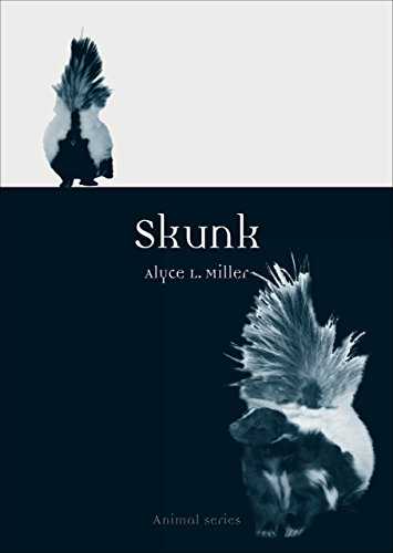 Skunk (Animal)