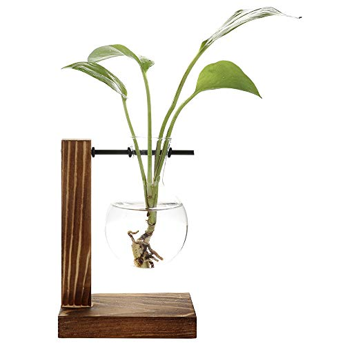 - ADSRO Stand Glass Planter Bulb Vase, Glass Flowerpot with Vintage Wood Frame Holder for Hydroponic Plant Family Garden Wedding Decoration - (1 Bulb Vase)