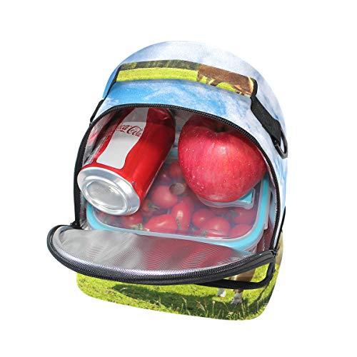 correa con ajustable para Bolso almuerzo pícnic de doble HU1WnAnBq