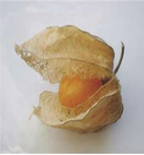 - 10+ Ground Cherry Seeds GOOD FOR JELLY & PRESERVES