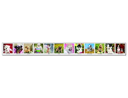House of Doolittle 2017 Monthly Desktop Tent Calendar, Puppies, 8.5