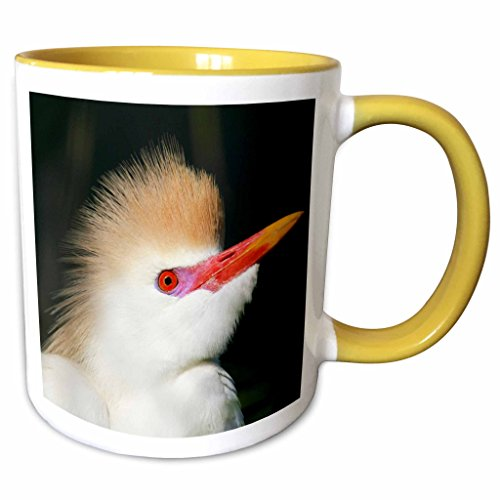 3dRose Danita Delimont - Birds - FL, St. Augustine Alligator Farm Cattle egret bird - US10 BJA0140 - Jaynes Gallery - 11oz Two-Tone Yellow Mug - Outlets Augustine Fl St