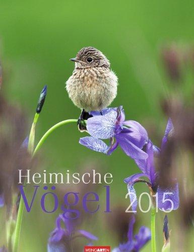 Heimische Vögel 2015