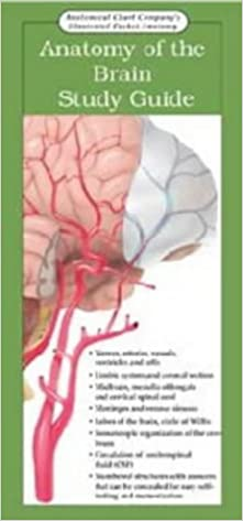 Anatomy of the Brain: Study Guide (Anatomical Chart Company's Illustrated Pocket Anatomy)