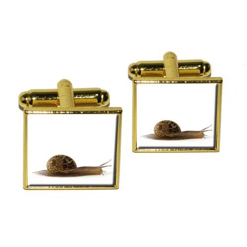 Snail Mollusk Square Cufflink Set - Gold