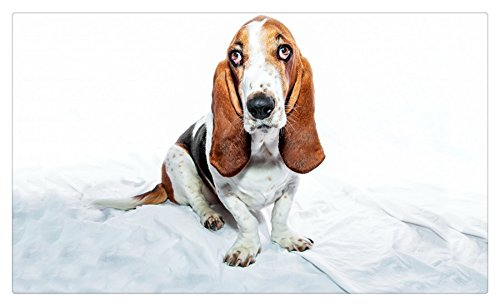 Dogs_Basset_Hound_471157 Postcard Post card