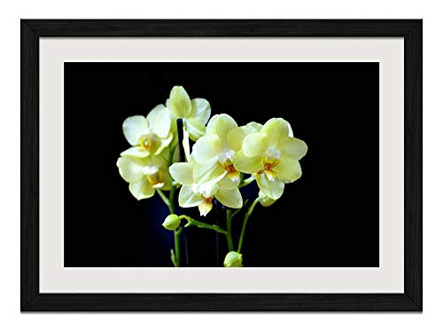 (R.Maltto Light Yellow Orchid Flower - Art Print Wall Hang Black Wood Frame Poster Framed Picture Home Decor(16x12inch))