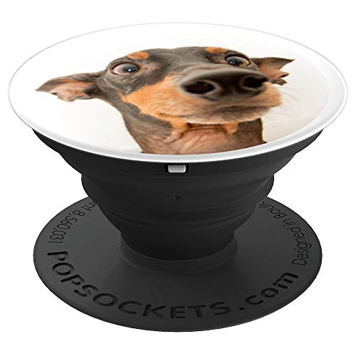 Funny Miniature Pinscher Dog Face - Cute Min Pin on White - PopSockets Grip and Stand for Phones and Tablets