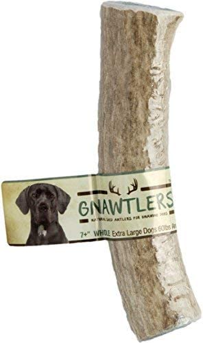 Pet Parents Gnawtlers – Premium Elk Antlers for Dogs, Naturally Shed Elk Antlers, All Natural Elk Antler Chews, Specially Selected from The Rocky Mountain Heartland Regions – Elk Antlers for Dogs