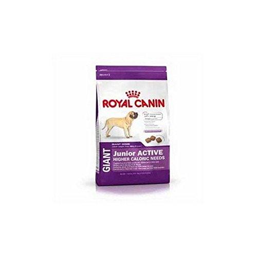 Royal Canin Giant Junior Active (15kg)