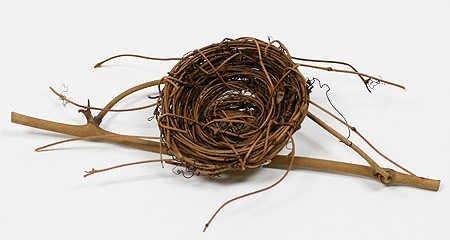 Bird Wild Nest - 2