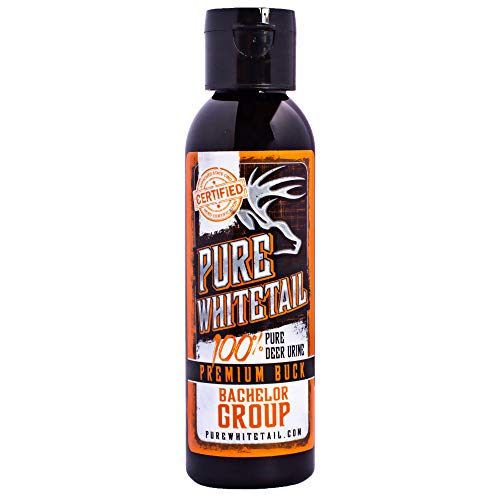 Pure Whitetail Bachelor Group Buck Urine - 4 oz, Fresh 100% Pure Mock Scrape Attractant and Calming Cover Scent from Multiple Bucks (Best Deer Attractant For Summer)
