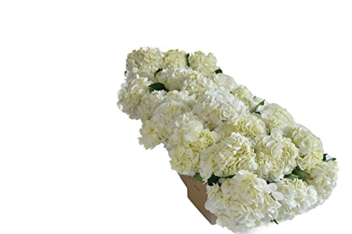 Farm2Door: Farm Direct Wholesale Fresh Flowers