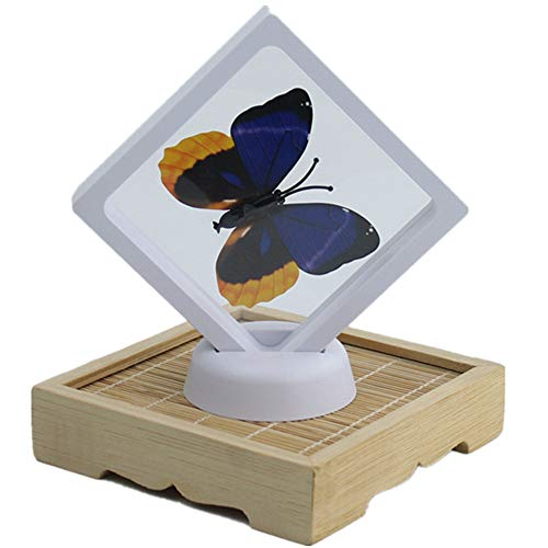 lay Holder Box Clear PE Plastic Floating Stand Frame Necklace Bare Stone Box Easy Use Home Deco (White, 2.752.750.78