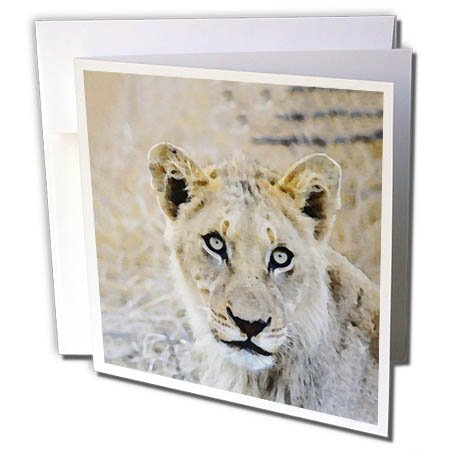 3dRose Andrea Haase Animals Illustration - Lioness Head Watercolor Illustration - 1 Greeting Card with envelope (Lioness Head)