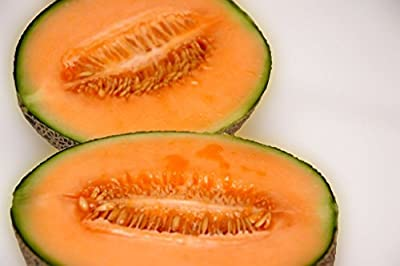 melon, IROQUOIS MUSKMELON, cantaloupe, 40 seeds! GroCo