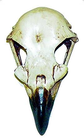 "Eagle Skull 2.5"" x 4.5"""