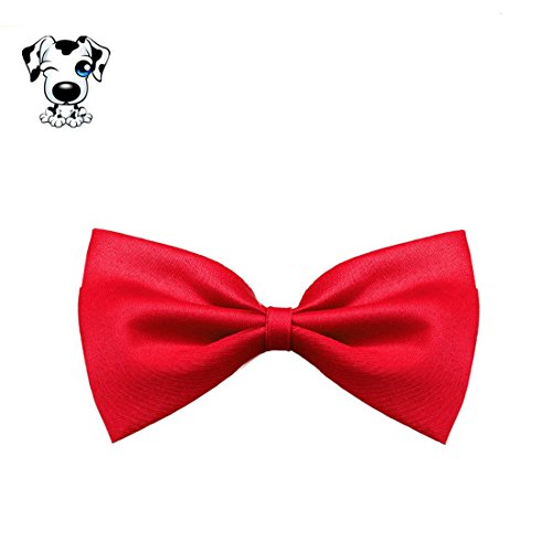 Chien-Chat-Cravate-Amison-Cool-Charmant-Chiot-Animaux-Collier-Nud-Papillon-Rouge